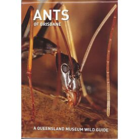 Pocket Guide: Ants of South-East Queensland