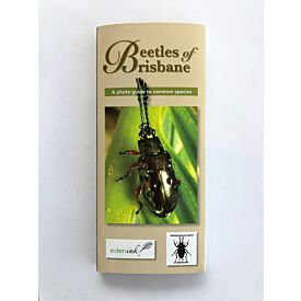 Beetles of Brisbane - A photo-guide to common species