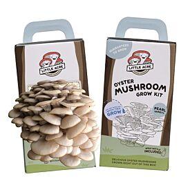 Pearl Oyster Mushroom Grow Kit